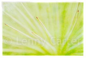 Kew Garden Plant Photograph